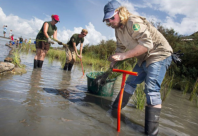 GulfCorps members build a living shoreline.